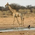 Desde Zimbabwe.Adelanto de fotos.