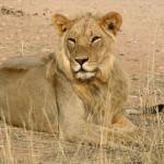 Parque Nacional del Kalahari