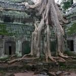Taprohm. La magia de Angkor