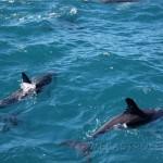 Kaikoura.Ballenas, delfines y focas.