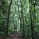 Bosque de Budongo. El hogar de los chimpancés.