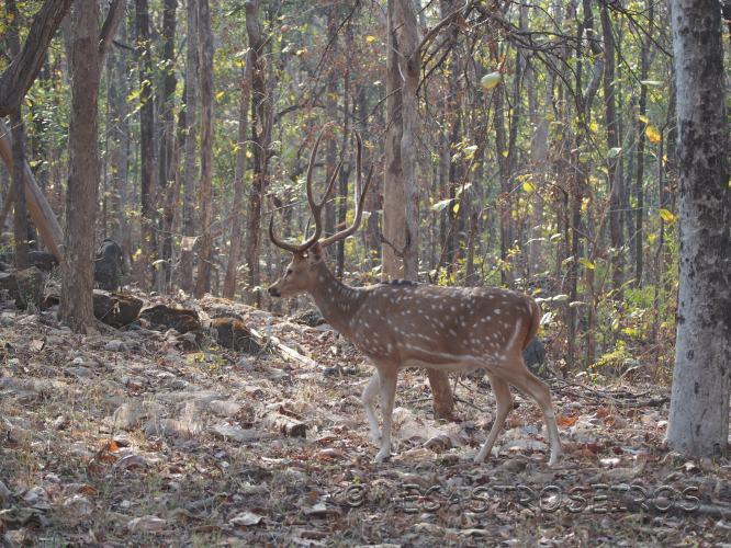 Pindkapar, State of Madhya Pradesh, India