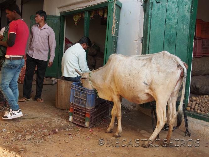 Baihar, State of Madhya Pradesh, India