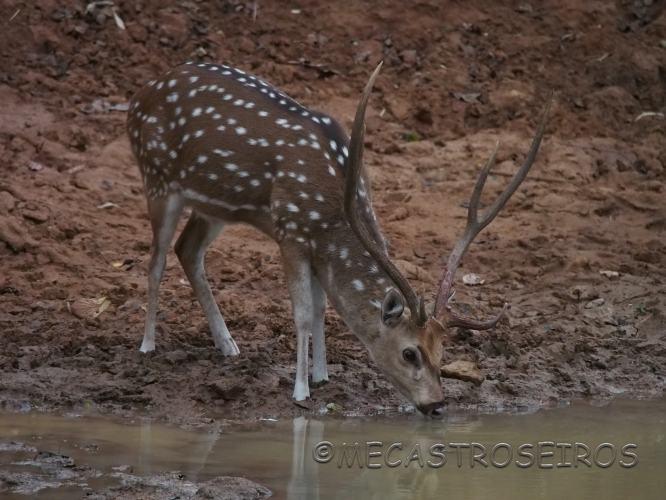 Khatauli, State of Madhya Pradesh, India