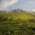 Nuwara Eliya. Las plantaciones del mejor té del mundo.