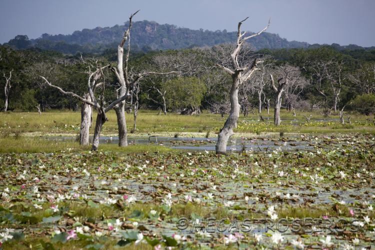 Parque Nacional Yala