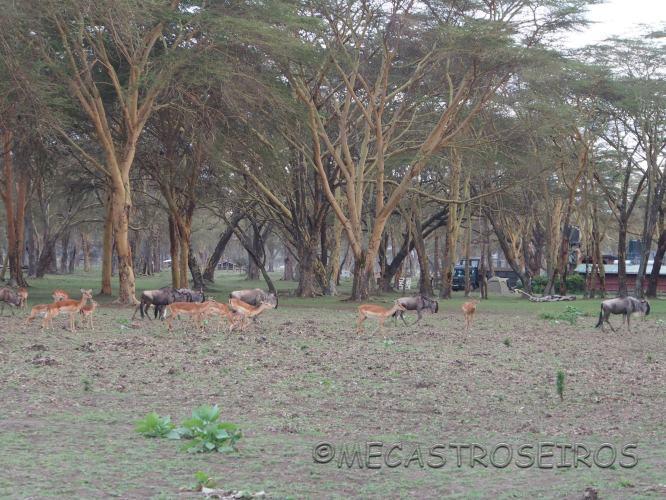 Naivasha, Rift Valley Province, Kenya