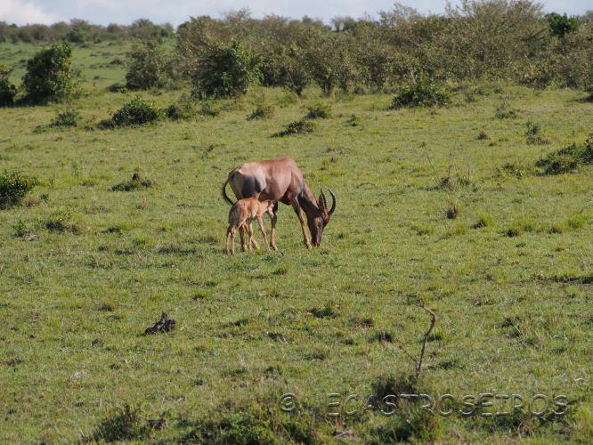 Lemek, Rift Valley Province, Kenya