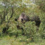 P.N. Masai Mara
