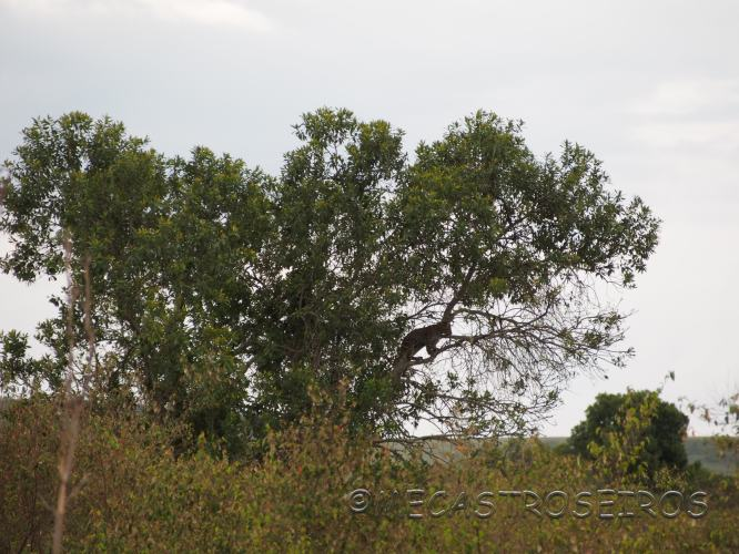 Lolgorien, Tanzania