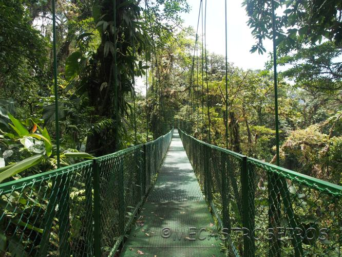 Reserva Biológica Bosque Nuboso de Monteverde