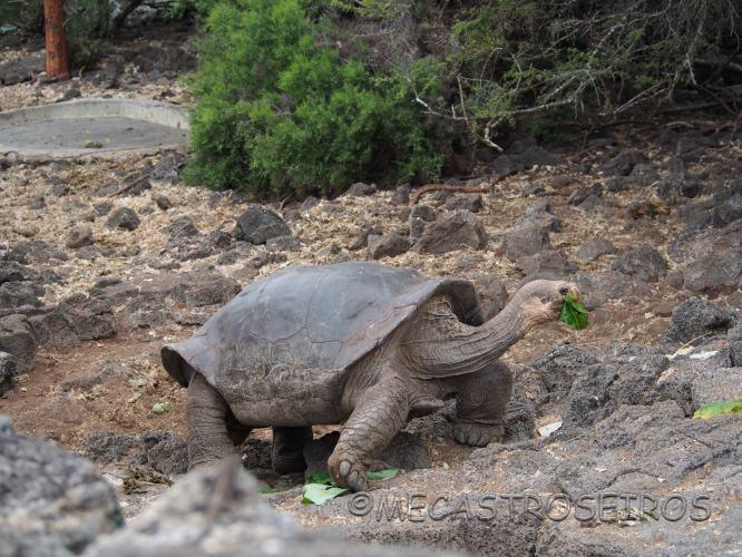 Galápagos. Isla de Santa Cruz.