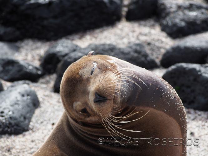 Galápagos.Isla de San Cristóbal.